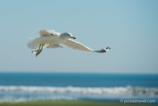 Sea Gull Flight