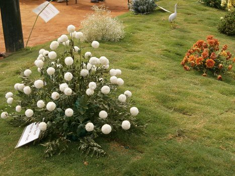 lalbaghflowershow2012005