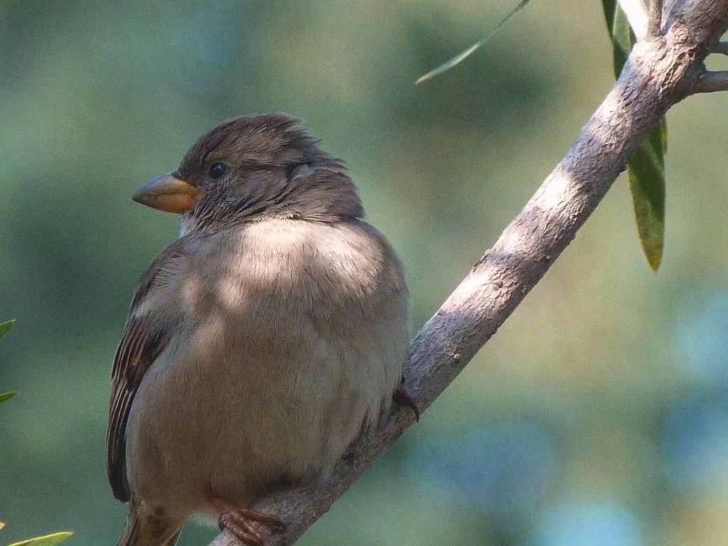 26-01-2012-sparrow