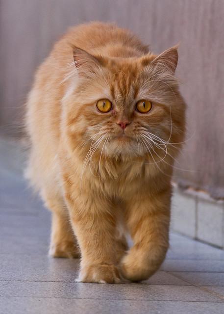 Dimitri  (Mimi)