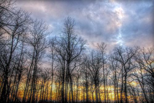 無料写真素材, 自然風景, 朝焼け・夕焼け, 樹木
