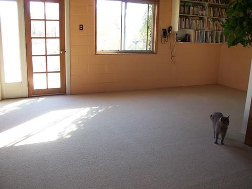 wool carpet 002