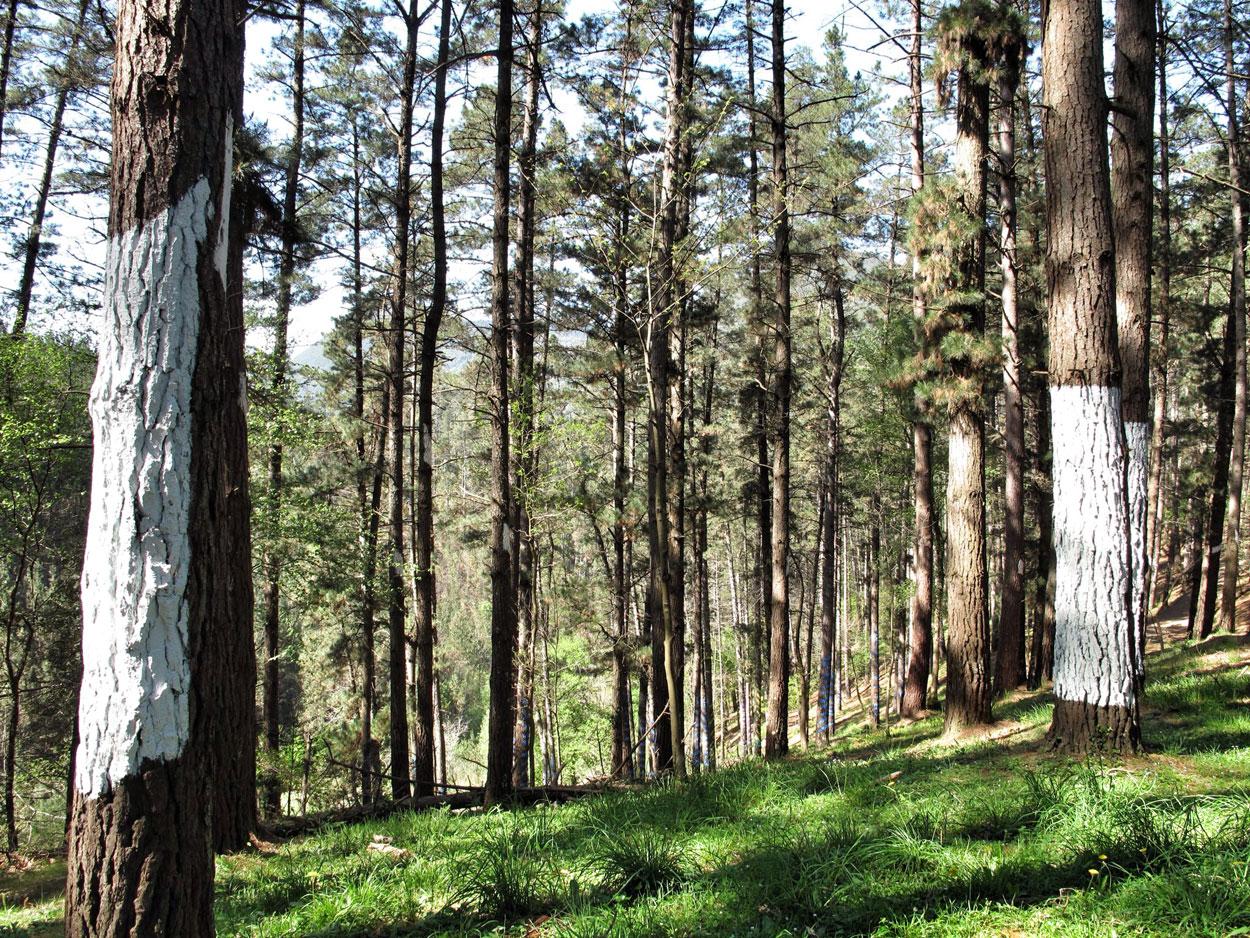 bosque de oma_1983_agustin ibarrola