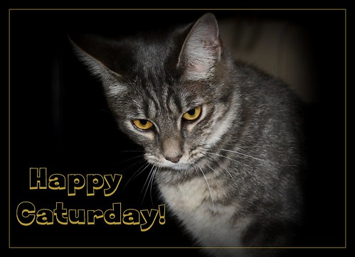 Happy Caturday !!!