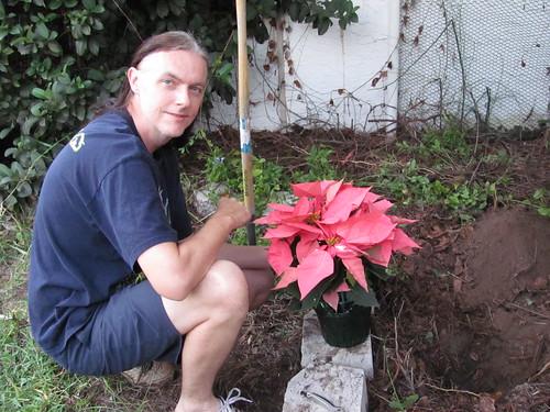 Chris planting pink poinsettia