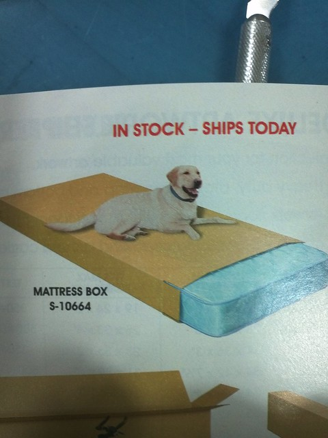 undoctored dog on mattress box