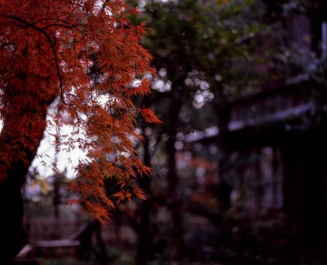 枝先の秋色