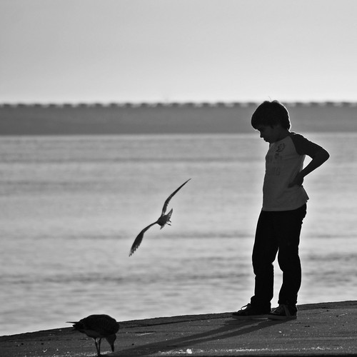 a gaivota - the sea-gull by @uroraboreal