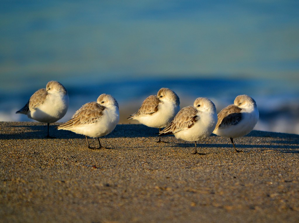 Surf Sand and Birds