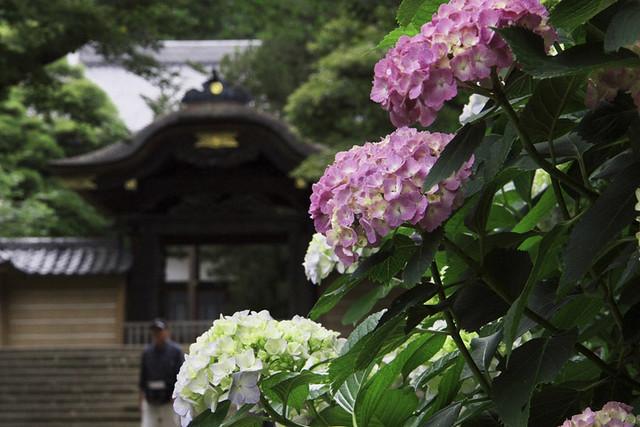 110615_123421_北鎌倉_円覚寺