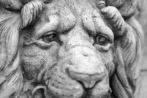fountain statue nose eyes head lion