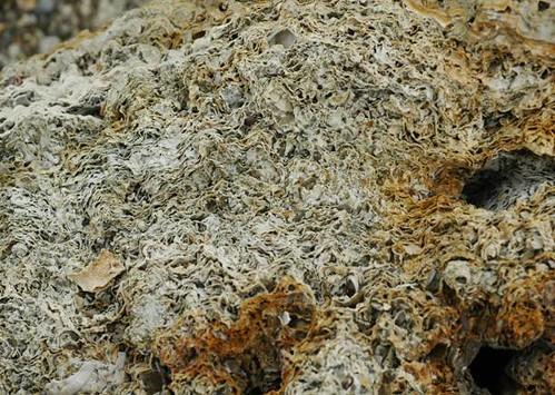 純藻類膠結的藻礁有些層鬆散有些層緊密。(圖片來源:劉靜榆)