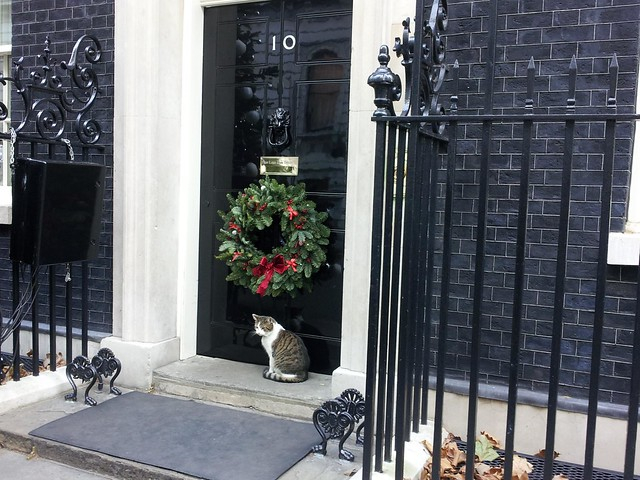 Downing Street Cat Gets A Chow Bella Dog Bowl