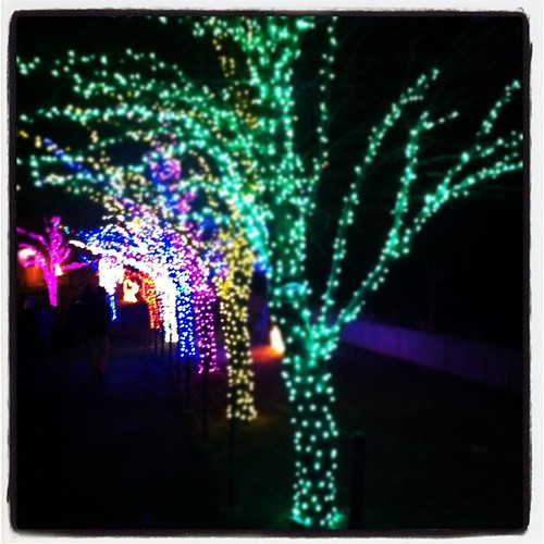 Zoo lights. New family tradition. @hoglezoo