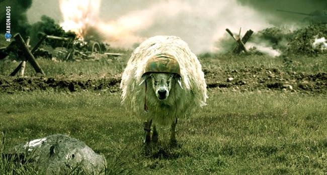 avaí ovelha