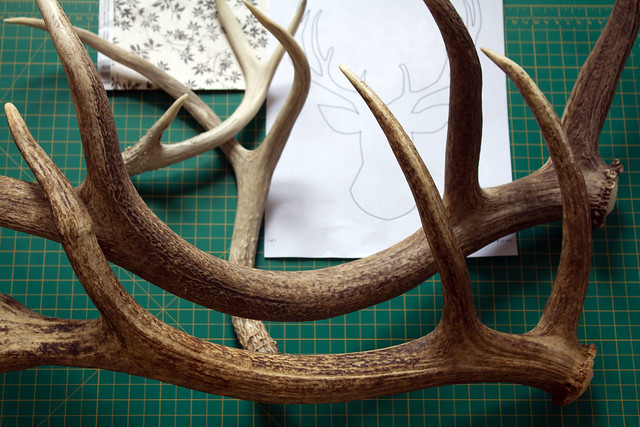 antler shed in the studio