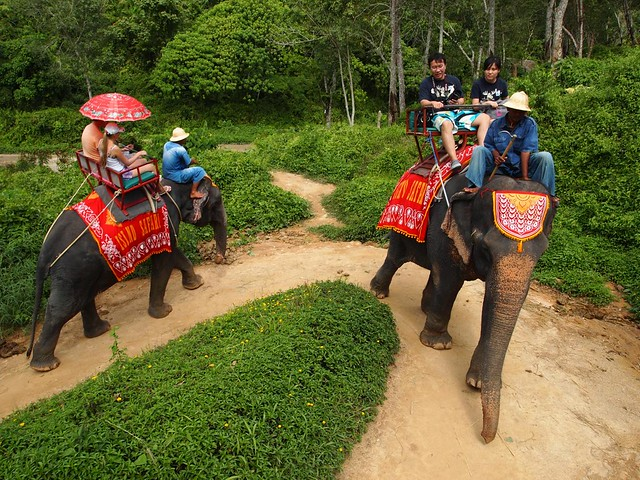 Elephant Safari by flickr user coolinsights