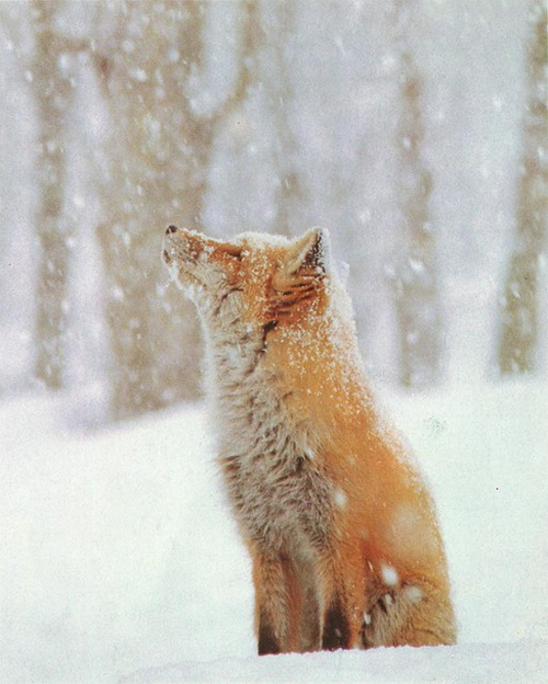 wintertime7.jpg
