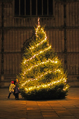 UK - Oxford - Bodleian Christmas Tree
