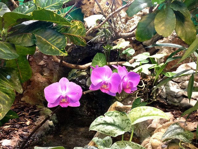 Orchid growing in the wild