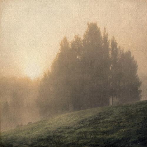 morning trees mist texture misty fog sunrise finland woods foggy slope rockpaper atsunrise gününeniyisithebestofday magicunicornmasterpiece sailsevenseas sailsevenseasmaster coppercloudsilvernsun artcityart