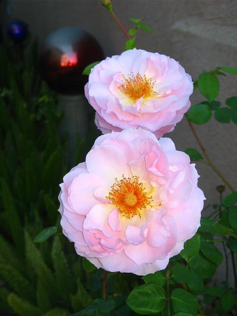 Rose Belle Story 01