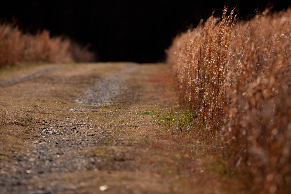 Road with Golden Grass