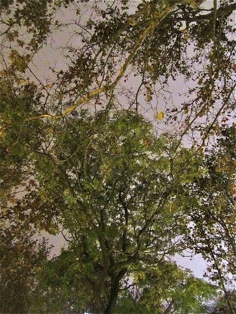 Un árbol complicado