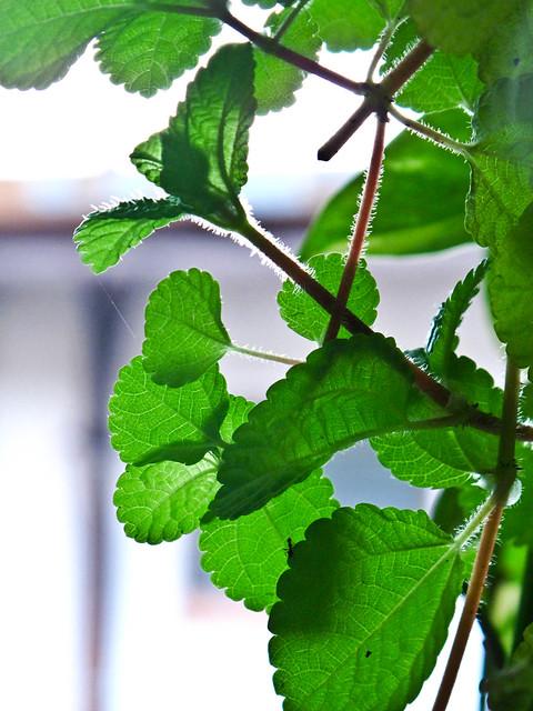 IMG_0828 Leaves