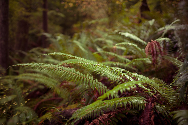 Wet Ferns