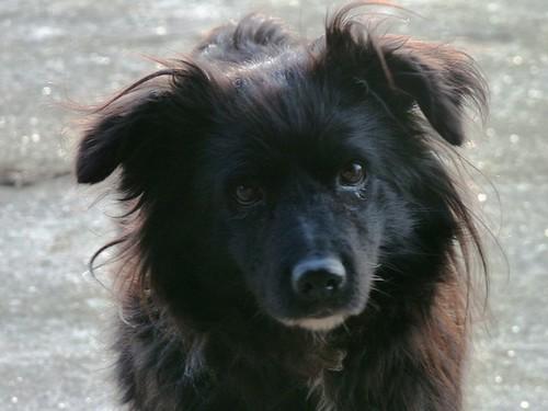 My dog Loana