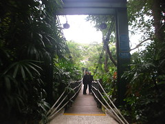 Ocean Park Suspension Bridge