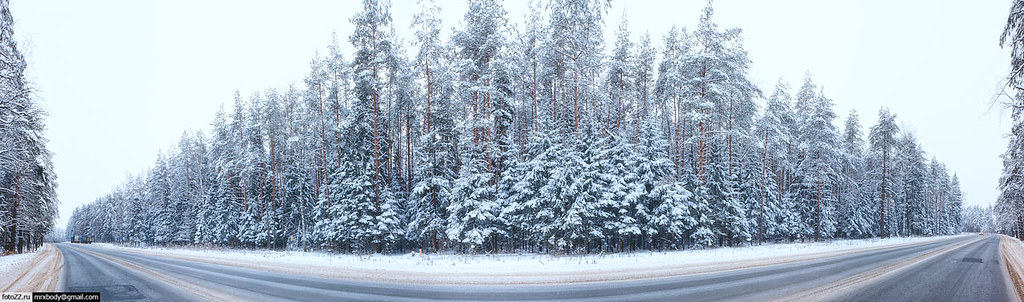 winter_forest-[20111225_53]