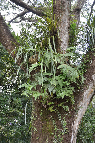 Fern, moss and other plants growing on a tree