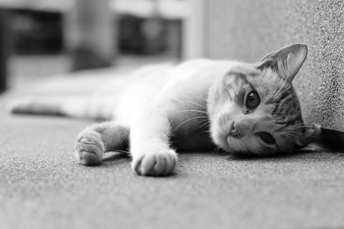 [フリー画像素材] 動物 1, 猫・ネコ, モノクロ ID:201201131000