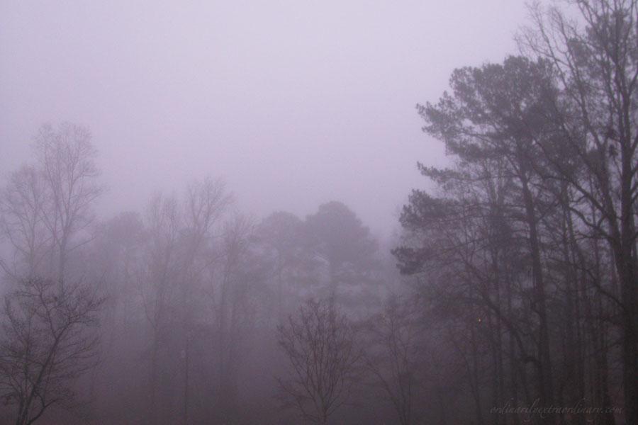 Fog_Jan082012_0002Aweb