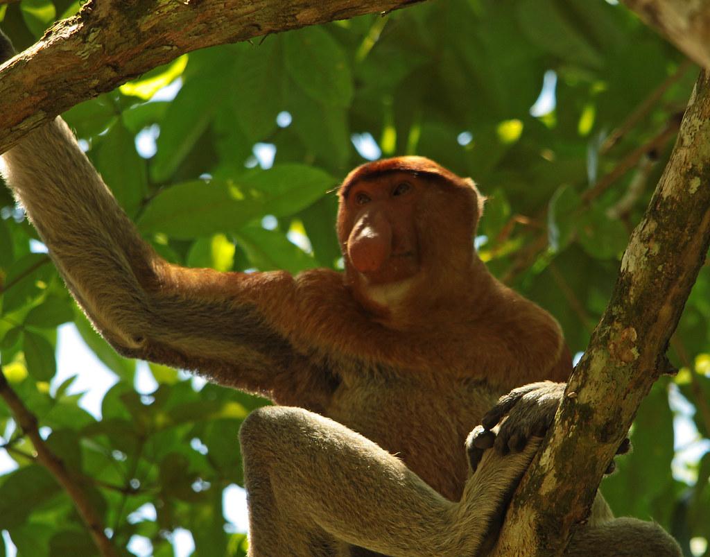 Bako National Park, Bintulu, Sarawak