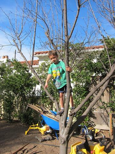 Ezra in a tree