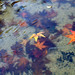 ice & leaves 3