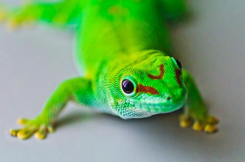 Hallo Gecko!