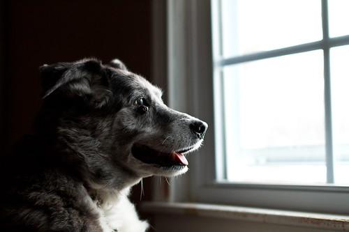 Skye Windowlooking 1 by Kenjis9965