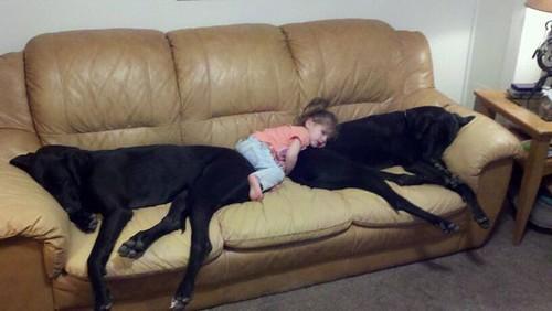 kids and pets.jpg 6