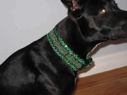 Modeling Angus' new collar