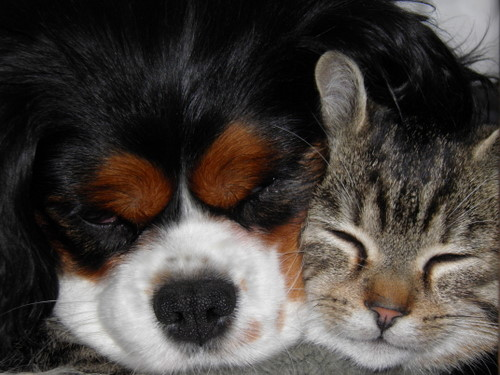 hond+poes