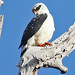 030 Hawks, Eagles