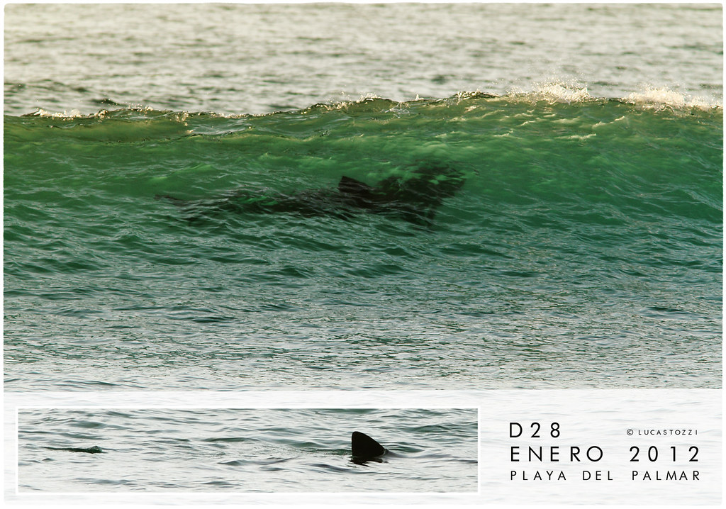 Shark - Playa del Palmar