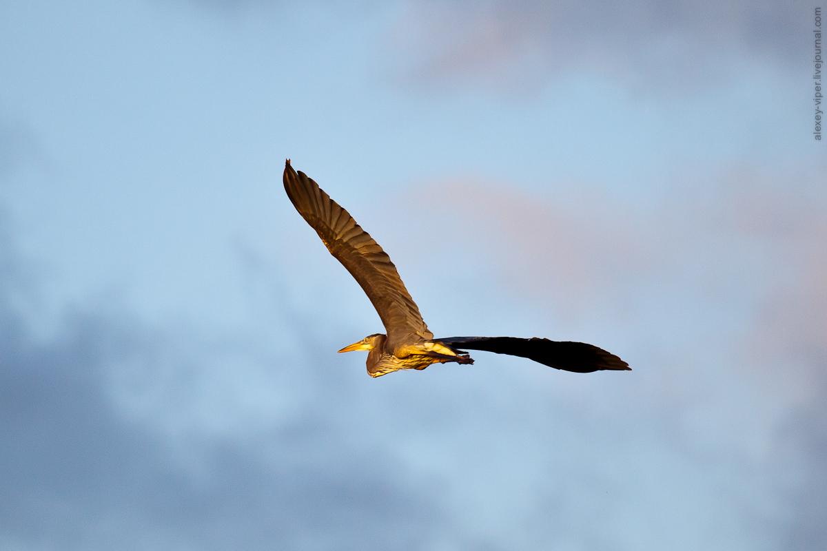 2012.01.12-2012.01.26_dive_safari_[cuba]-diving-003