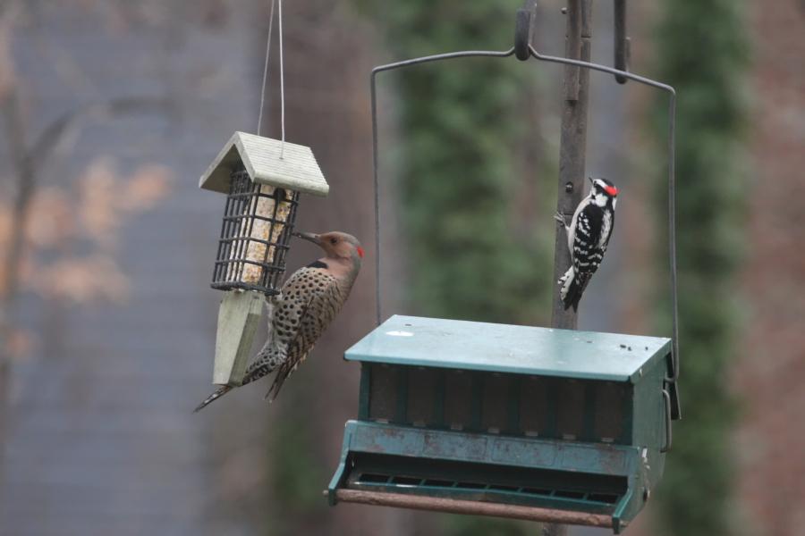 Feb_01_Birds_001