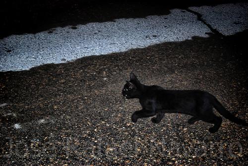 Cuando se cruza un gato negro en tu camino...