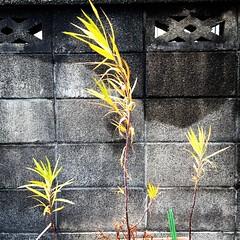 Kyoto February